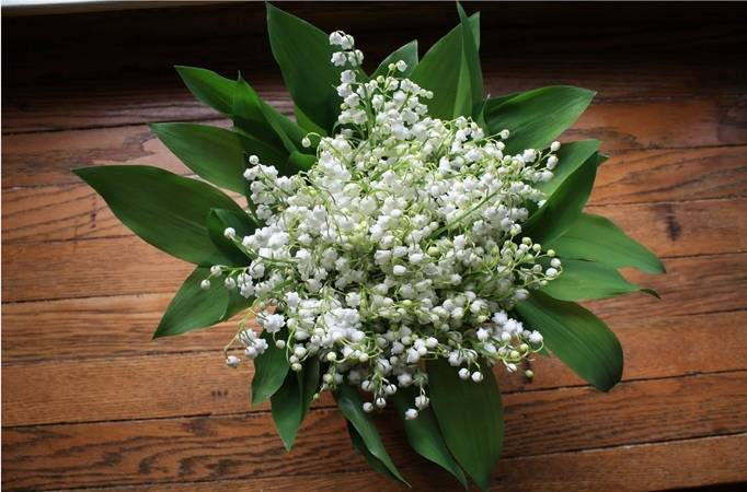 Flower Inspiration: Lily Of The Valley