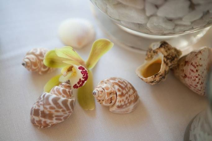 seashell wedding theme