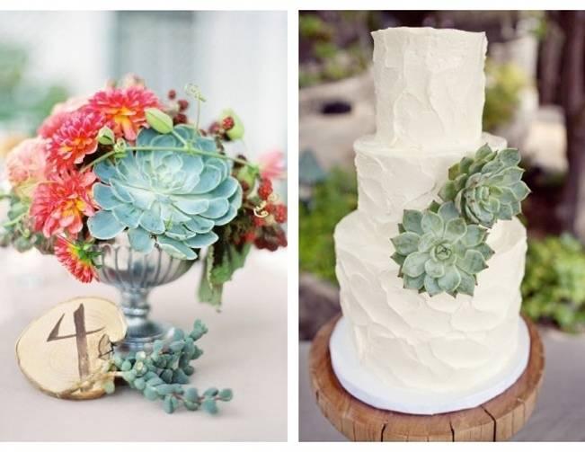 succulent centerpiece, cake