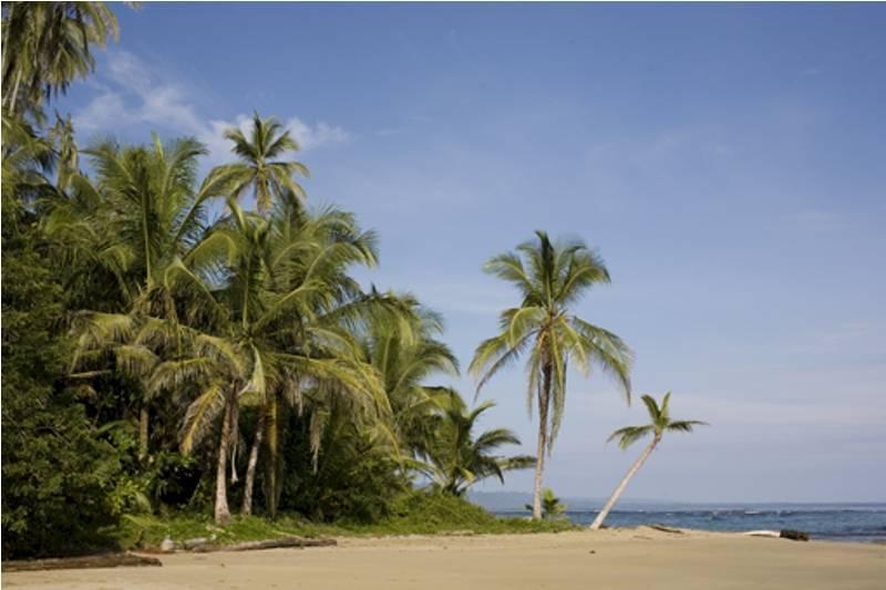 Beach-punta
