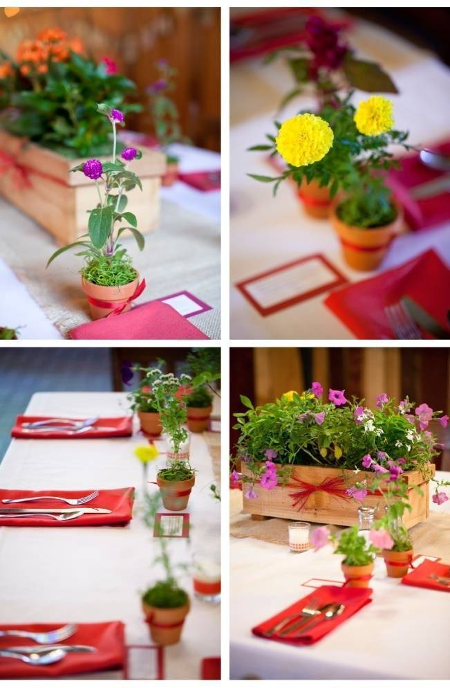 colorful potted herb centerpieces