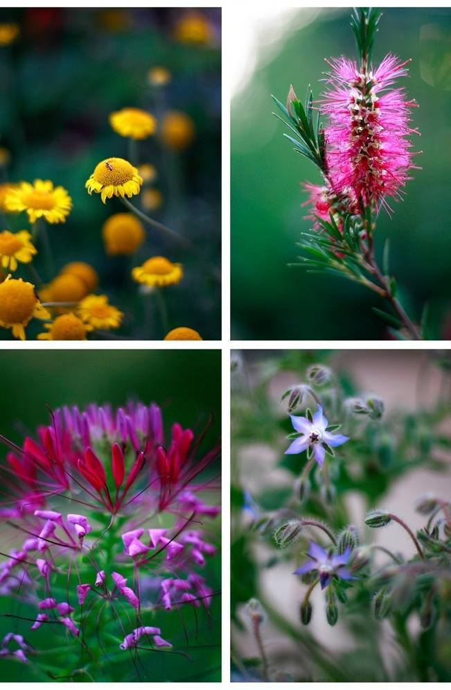 pink, yellow, purple flowers, french garden