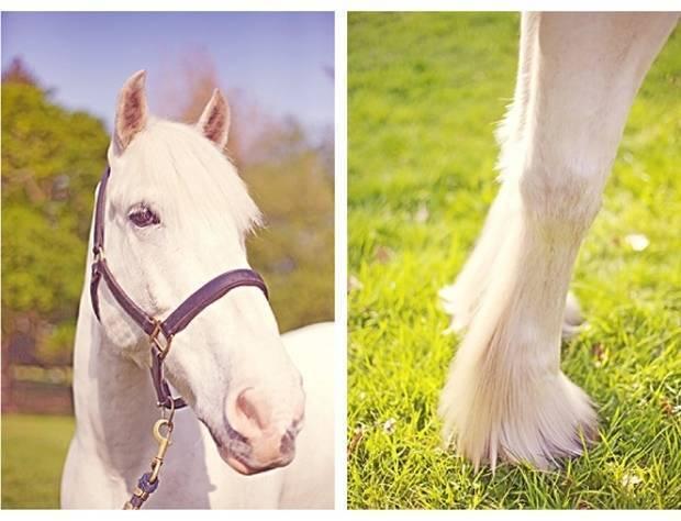 big white horse