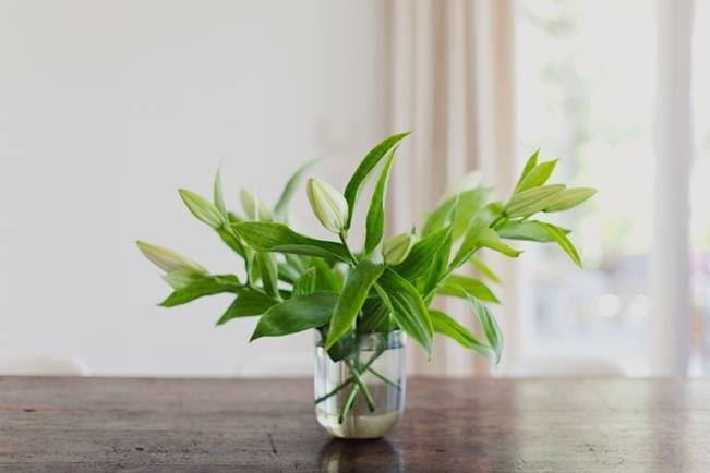 simple house plants for weddings