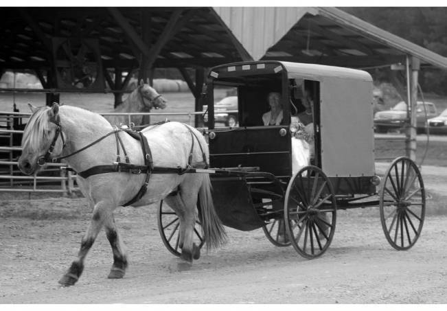 bride in horse drawn carriage