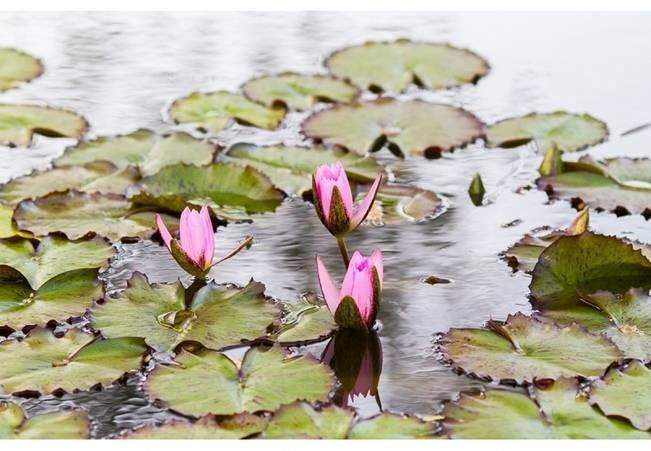 water lilys garden pond wedding