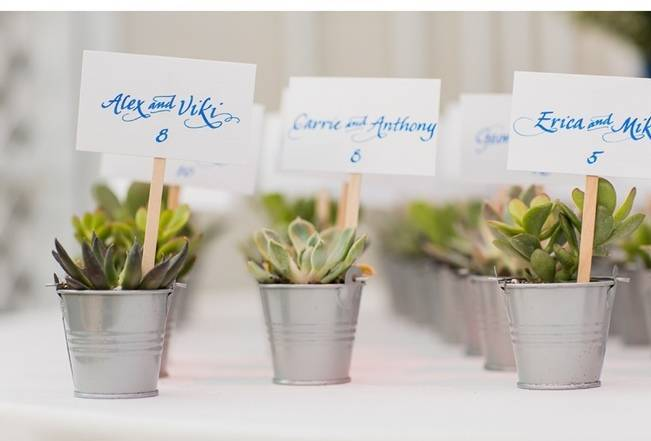 succulent plant wedding favors
