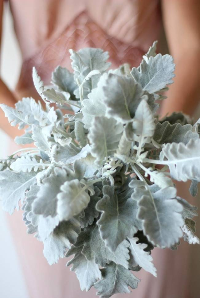 Bouquet Made Entirely From Dusty Miller