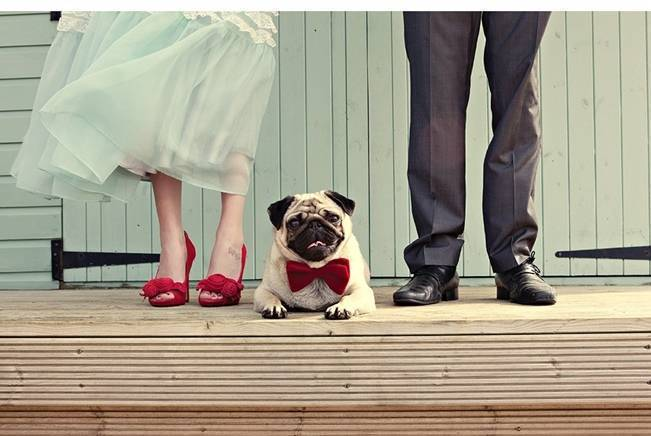 bride and groom with pug in a bowtie