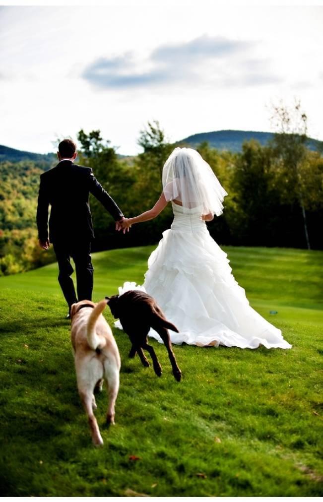 bride and groom with labrador retrievers