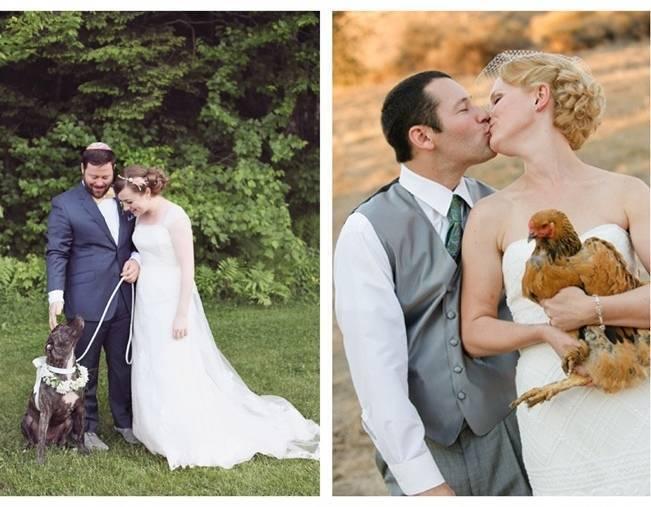 farm wedding with chickens