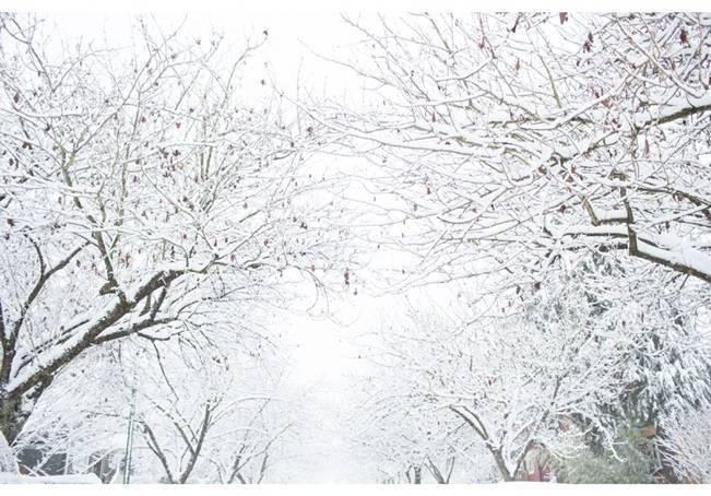 Winter Woodland Inspiration {Angela Hubbard Photography} 9