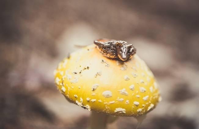 Charming DIY Woodsy Wedding {Bonnallie Brodeur Photography} 5