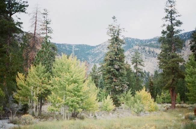 A Woodland Romance – Autumn Fairy Bride {Gaby J Photography} 10
