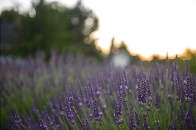 Vintage Lavender + Lemon Styled Shoot {Katrina Amburgey Photography}