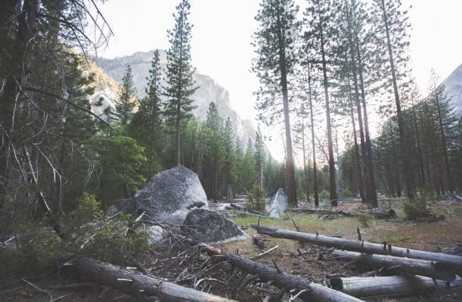 Rustic Sequoia National Park Wedding at {Carly Short Photography} 25